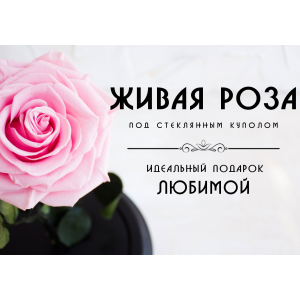 Роза в колбе - лучший подарок любимой!