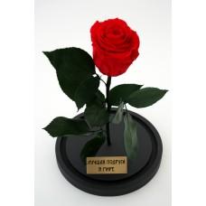 Живая роза в колбе для подруги