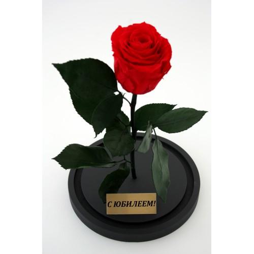 Живая роза в колбе на юбилей 80 лет